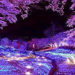 夜桜を東京で楽しみたいあなたへの花見穴場スポットまとめ!!